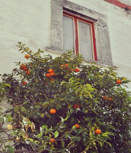 oranges tree